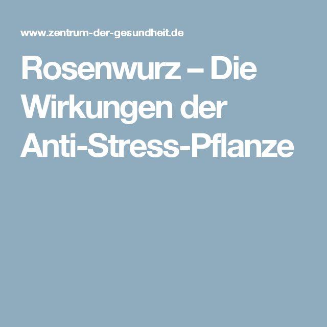 Rosenwurz – Die Wirkungen der Anti-Stress-Pflanze