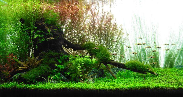 水草水槽新規立ち上げ4ステップ(その3)!あなたに適したレイアウト構図の選び方 | AQUA SHOP wasabi ブログ「京のわさび」