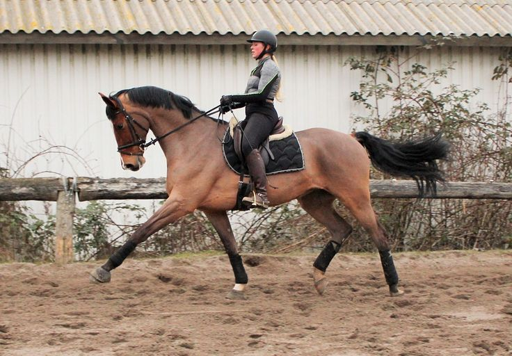 Heste under uddannelse   Holfelt stavneri – hestesalg, opdrætning og træning til privat og erhverv #ridning #heste #springhest #danskhest #danskvarmblod