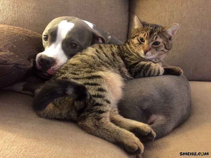 Всем известно, что коты и собаки — это лучшие друзья — Smehu.com
