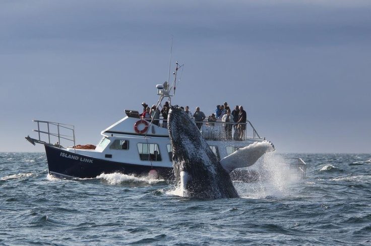 Whale watching,Digby Neck, Nova Scotia