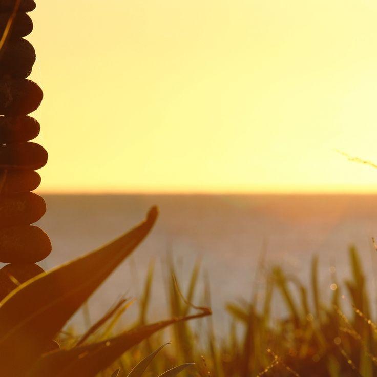 Balanced rocks and plants at sunrise