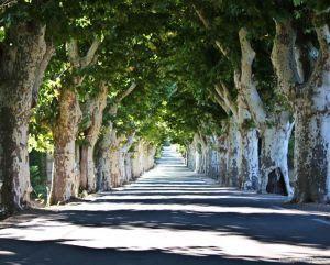 Malemort du Comtat vers Methamis.Cantal.