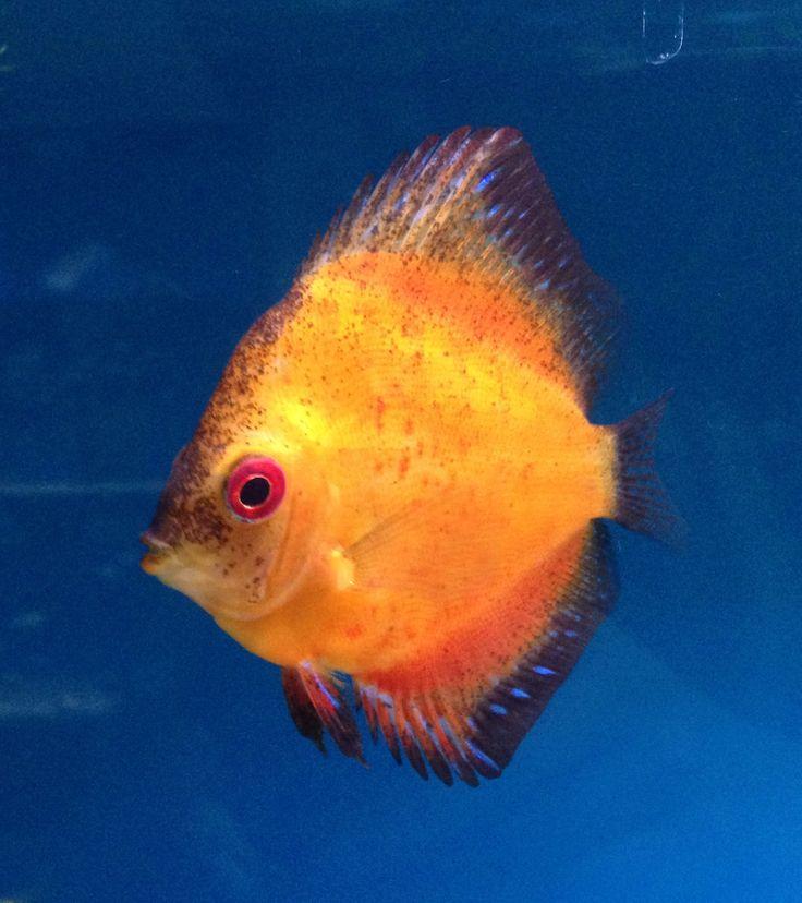 Tropical fish. Stunning!  Stratford Garden Centre