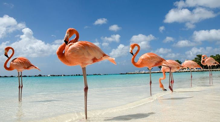 Dream Job Alert: Get Paid to Play with Flamingos in the Bahamas