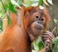 Wildlife Conservation, Endangered Species Conservation :: sweet baby needs your help