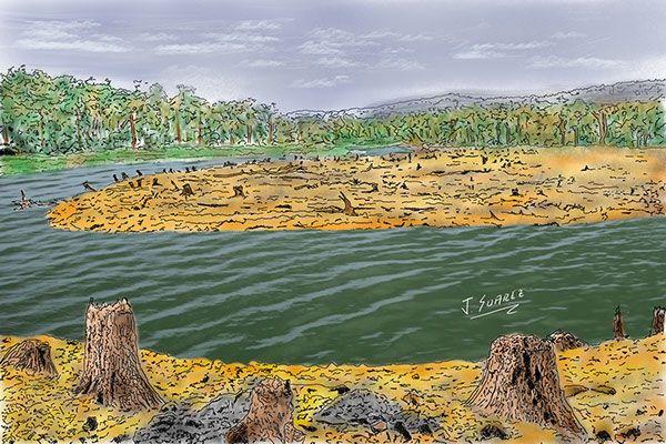 Ilustración Digital - Deforestación cuenca río magdalena on Behance