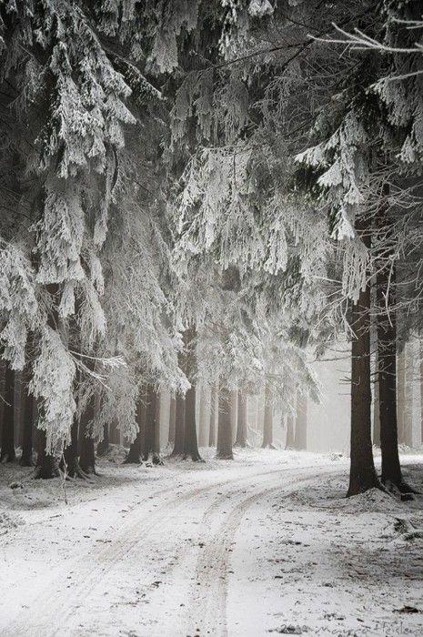 snowy trees.