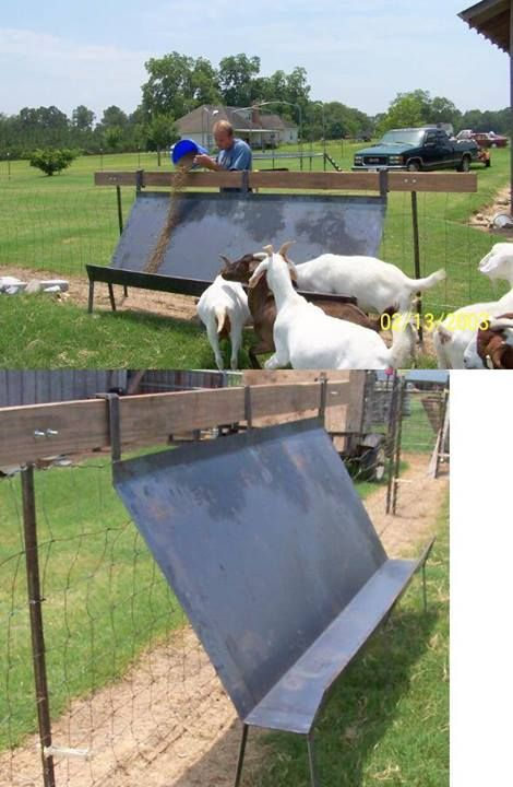 234 Best Images About Goat On Pinterest Hay Feeder Baby
