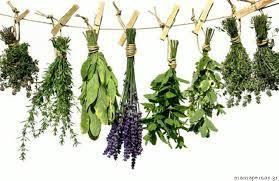 მცენარეები და ჯამრთელობა