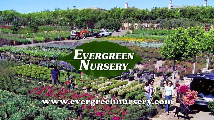 Evergreen System and Testimonials
