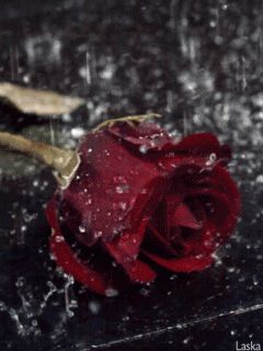 Rose..... *When you see - GIF - in the corner of a pic, just click it and the photo will animate   :)