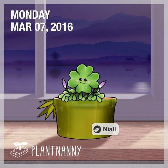 Say hello to my plant! It has absorbed 13,000 ml of water. Get yourself a plant at http://fourdesire.com/outer_link?url=http://itunes.apple.com/app/id590216134&l=en_ID&m=56DC747B