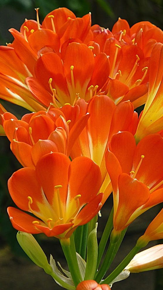 30 Types Of Orange And Yellow Flowers Hd Images Beautiful