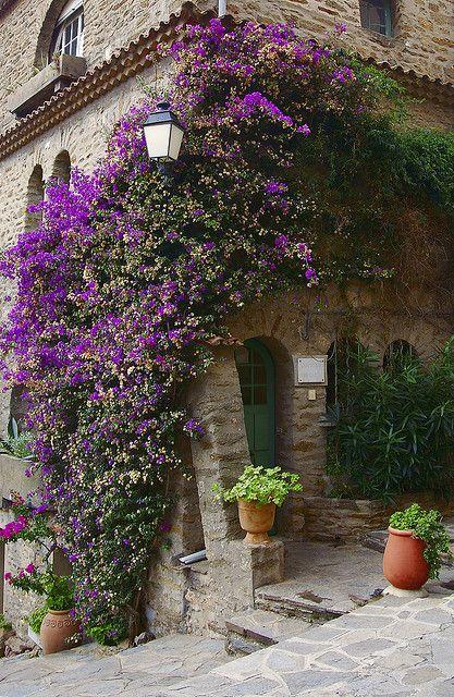 Bouganville covered tower, Bormes-les-Mimosas, Provence-Alpes-Cote d'Azur, France
