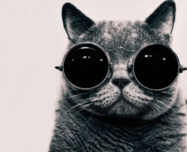 """John Lennon cat"": Hipster Cat, Cool Cat, Kitty Cat, Cat Eye, Funny Cat, Steampunk Cat, Photo, Coolcat, Animal"