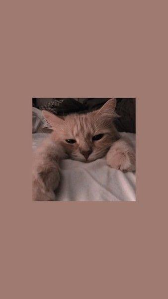 Lol, ich liebe Katzen, aber ich bin allergisch