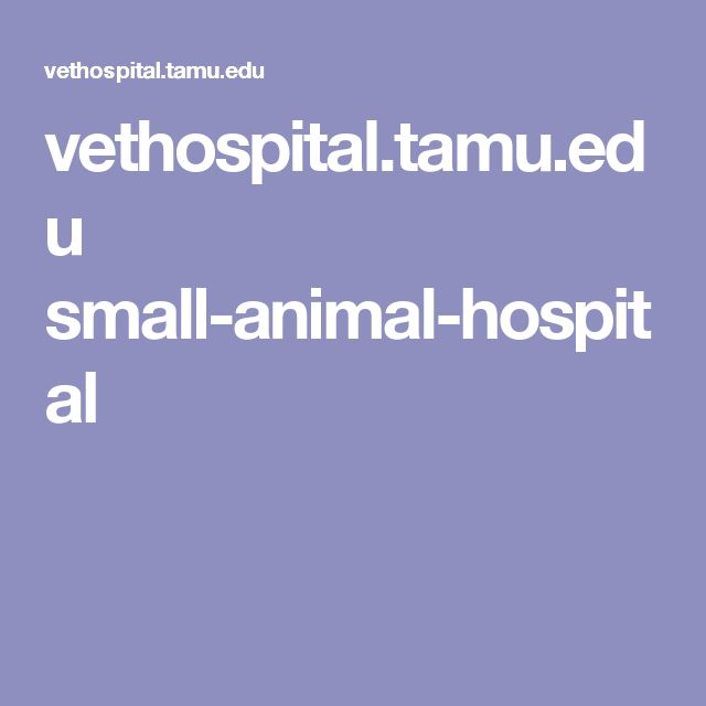 vethospital.tamu.edu small-animal-hospital