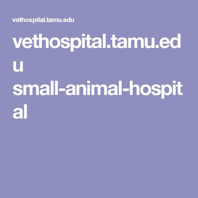 vethospital.tamu.edu small-animal-hospital