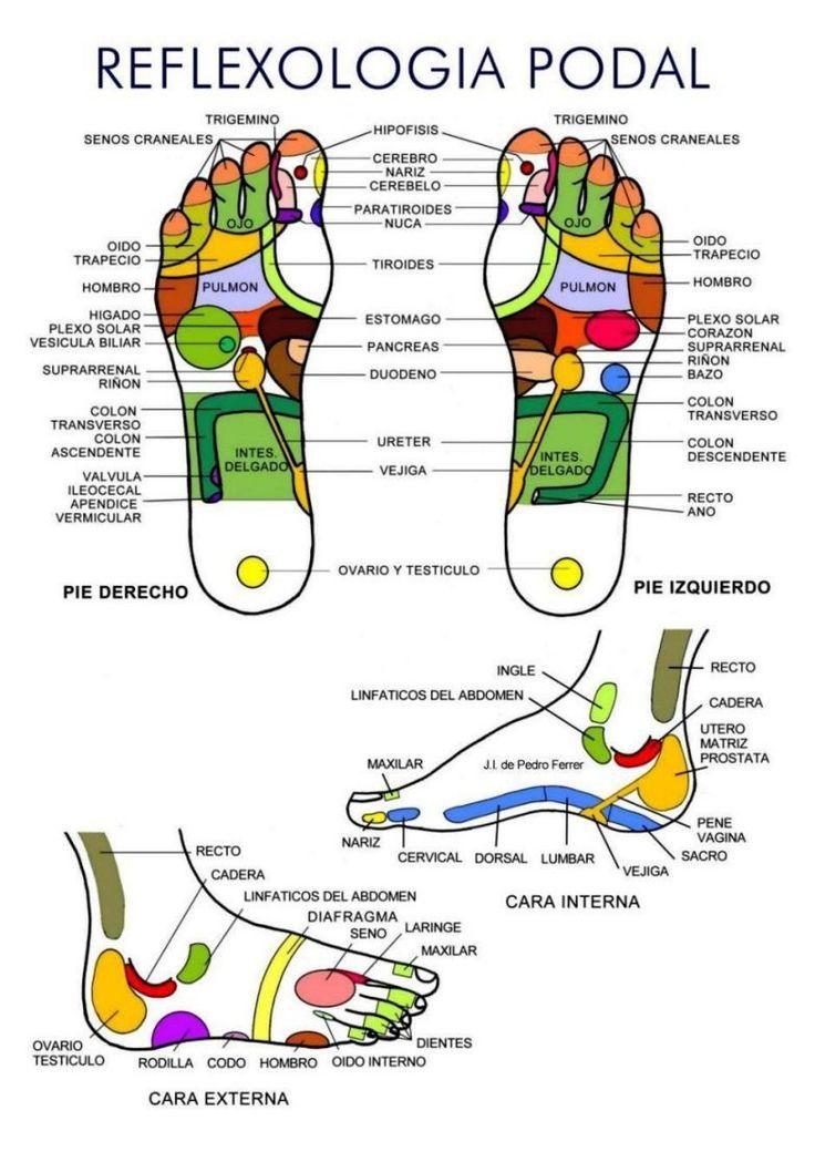 ubicación de los puntos reflejos de los órganos