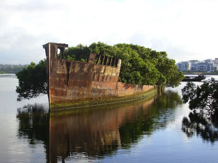102-Year-Old Abandoned Ship is a Floating Forest - The SS Ayrfield is one of many decommissioned ships in the Homebush Bay, just west of Sydney