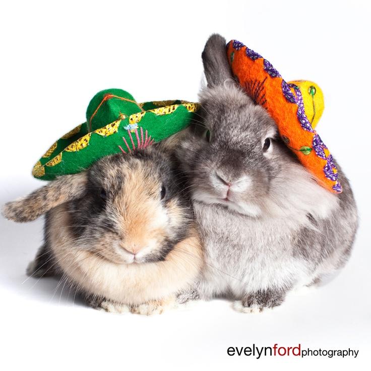 Bunnies, Harley and Einstein, in sombreros