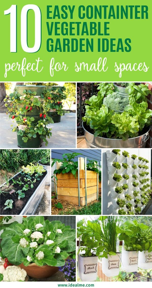 10 Easy Container Ve able Garden Ideas for Your Yard