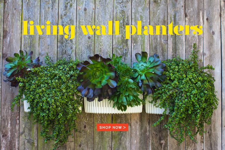 These planters can be hung on pretty much any type of wall, indoors or out. They are made from recycled plastic bottles and have a reservoir system. Recycle and grow your own. Pretty cool.