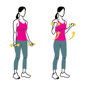 Biceps Curl: Hold a pair of dumbbells at your sides, palms facing forward, and keep your back straight and chest up. Without moving your upper arms, bend your elbows and curl the weights toward your shoulders. Slowly lower the weights back to the starting position, straightening your arms completely. That's one rep.
