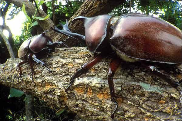 Crítica | O Escaravelho do Diabo, de Lúcia Machado de Almeida