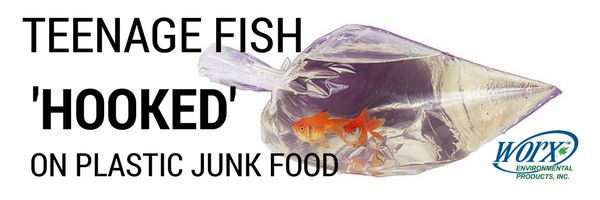 Young fish are eating small plastic particles like junkfood.  Companies need to start taking action and investing in biodegradable products.   Any plastic based chemicals entering the local water system must be accounted for.    Switching from a conventional handcleaner, to industry certified products will help the environment by reducing plastic waste.  Let your customers know that your company cares about the environment, and the future.