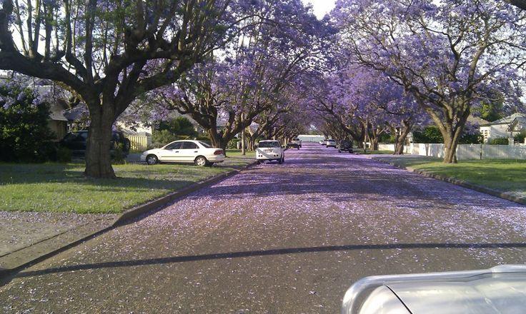 Singleton Australia 2009 -