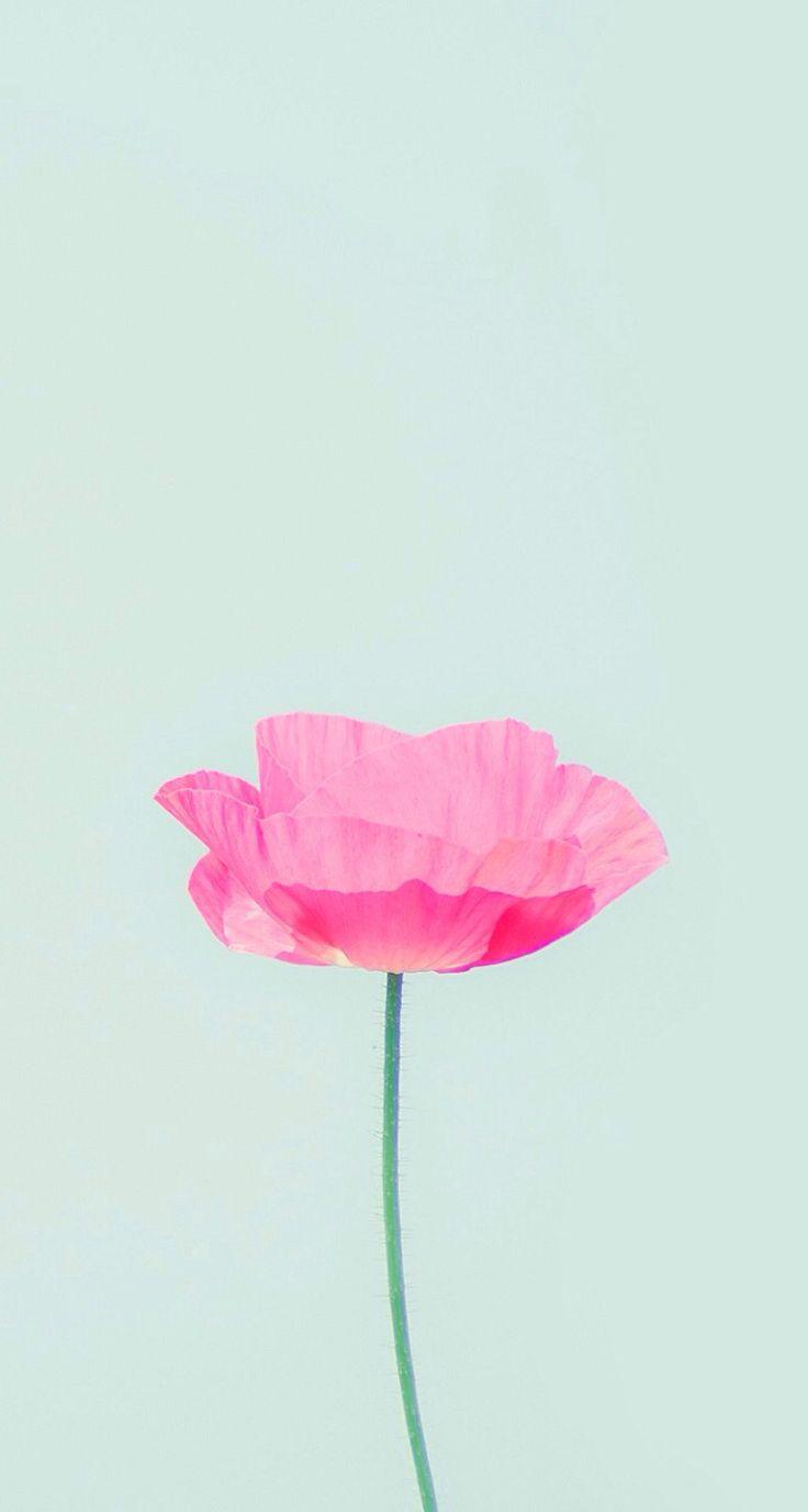 Aquarela/Flores.