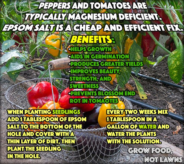 17 Best Ideas About Epsom Salt For Tomatoes On Pinterest Epsom Salt For Plants Tomato