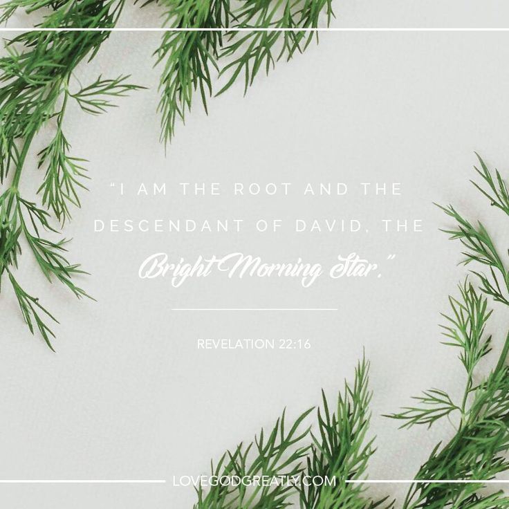 {Week 1 - Monday} Lord, thank you for sending us Your Bright Morning Star to keep us focused on Your guidance today. #Christmas #BibleStudy #LoveGodGreatly
