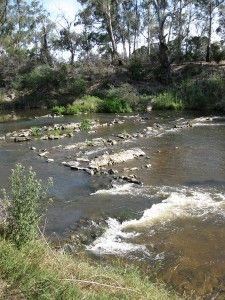 Melbourne Park Walk: Sweeneys Flats to Griffith Park - Eltham - Victoria - Bushwalking Blog