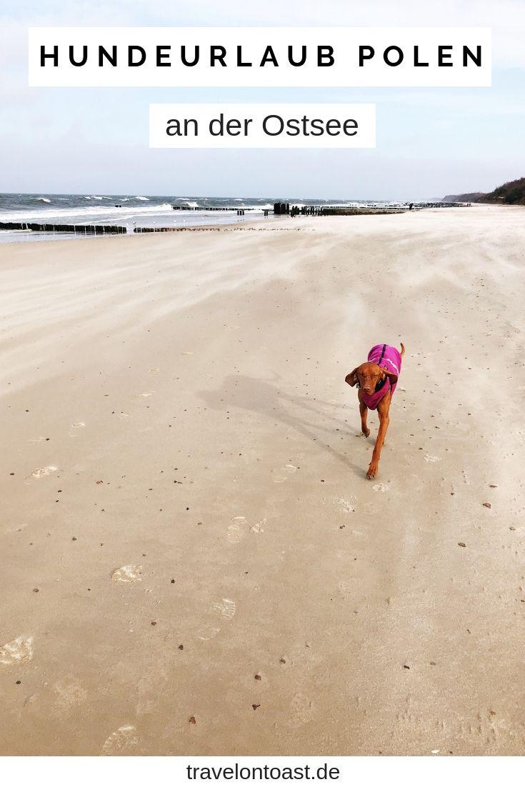 Polnische Ostsee Kolberg Urlaub 2020 Erfahrungen Und Tipps Travel On Toast Ostsee Urlaub Urlaub Urlaub Mit Hund Ostsee
