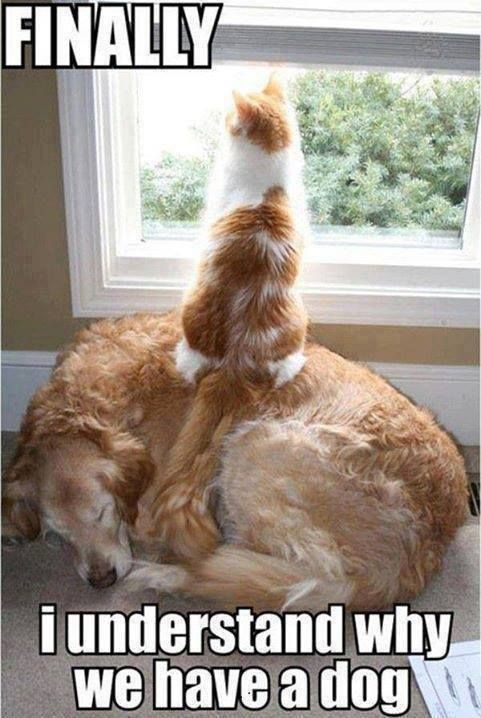 funny cat and dog pictures       jokideo   funny cat dog