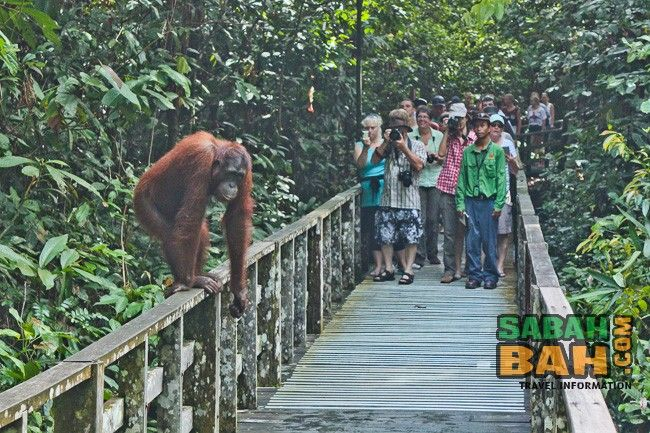 Enjoy a day of wildlife in #Sandakan #Sabah on this day tour that takes you to the sanctuaries around the city. Join the tour either from in Sandakan, or add flights for a 1-day tour from Kota Kinabalu.
