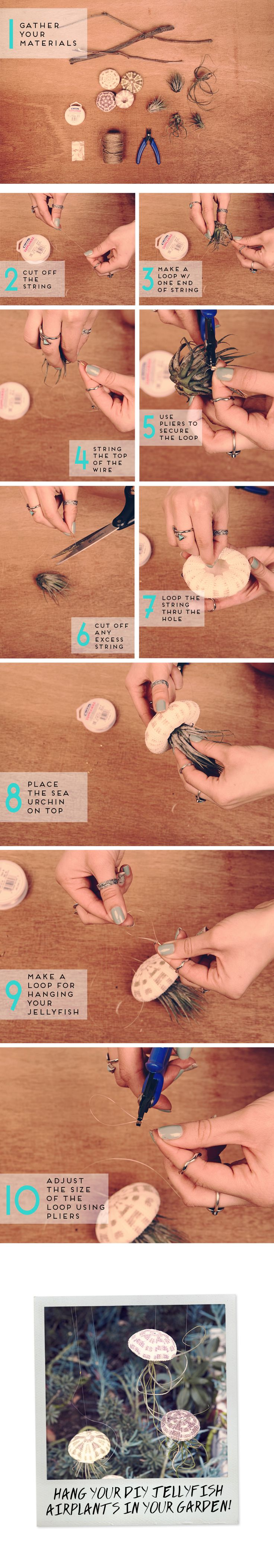 DIY: HOW TO MAKE JELLYFISH AIR PLANTS- Supplies: transparent string sea urchins air plants crimp beads flat nose pliers scissors- Don't forget to submerge the plant in water for 2-3 hours every two weeks!