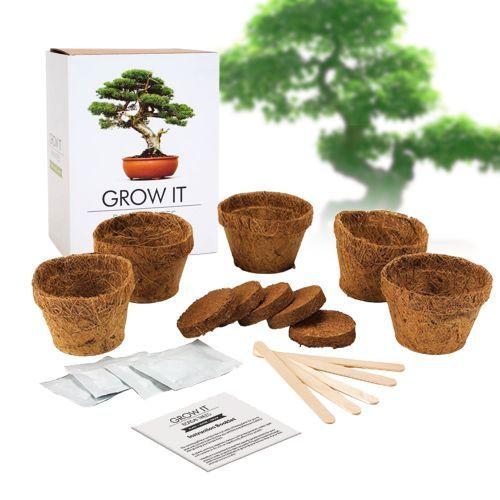 Werde zum Meister der japanischen Gartenkunst und züchte deinen eigenen majestätischen Bonsai Baum mit dem Bonsai Baum Set - Selber pflanzen.