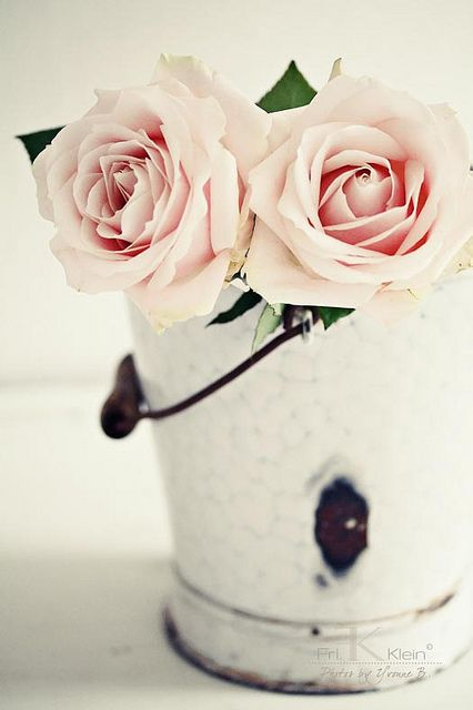 blush pink roses in a simple bucket.  Just <3 love it!