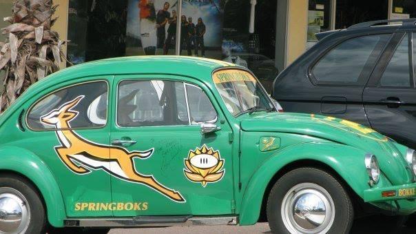 Springbok Volla