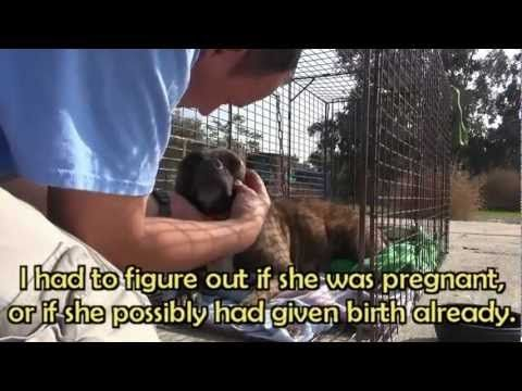 My favorite rescue video so far! Thank goodness for people who are caring and take the time to help those who are scared, alone, and sometimes ill.