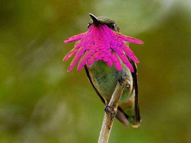 20 Beautiful Close-up Photographs of Hummingbirds | BlazePress
