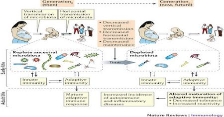 The Theory of Disappearing Microbiota and the Epidemics of Chronic Diseases.   In the present era medical scientists have been confounded by the increasing incidence of multiple diseases across the world beginning first in developed countries and gradually spreading to other areas as they develop. These include the rises in cases of obesity asthma hay fever food allergies inflammatory bowel disease juvenile (type 1) diabetes and autism among many others. Are these diseases which affect…