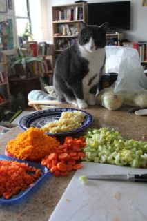 Tips to keep cats of the kitchen counter
