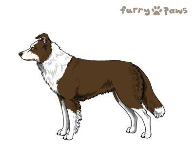 Furry Paws // WCH Kip's Jolteon [1.583] *BoB*'s Kennel