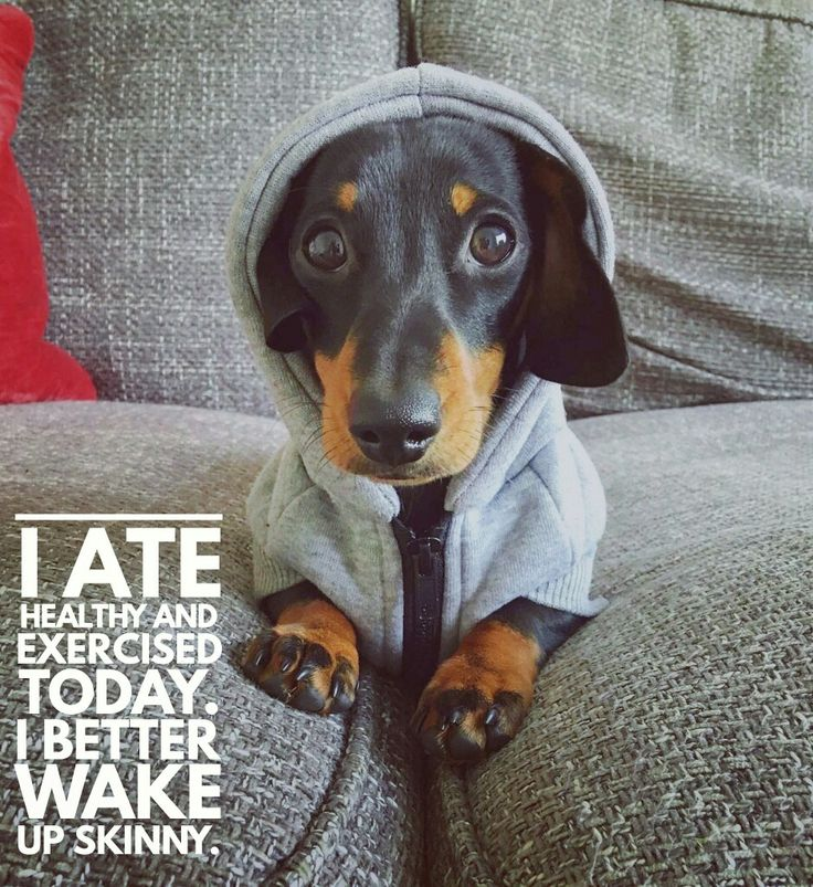 Daily dachshund quotes                                                                                                                                                                                 More