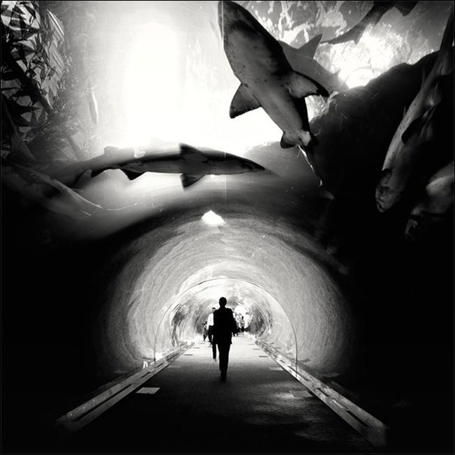 SharksSharks Weeks, Sharks Tanks, Dubai, Black And White, Aquariums, Black White, Sea, Places, Photography
